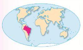 Характеристика Бразилии кратко География Реферат доклад  Бразилия на карте мира