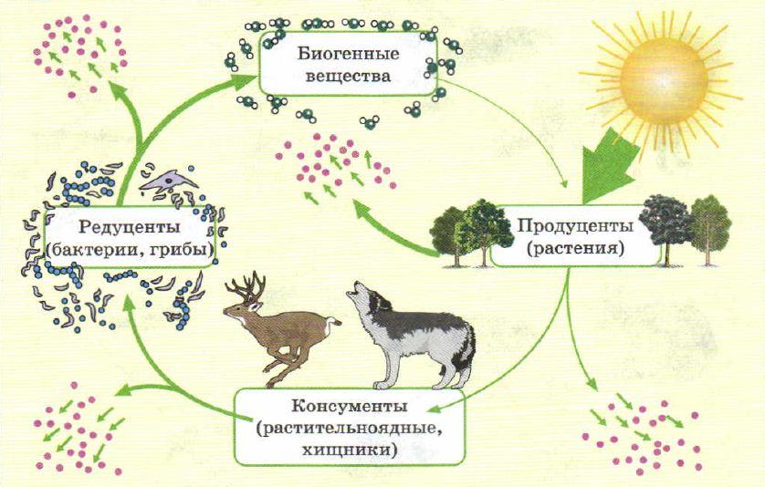 Экосистема Экология Реферат доклад сообщение кратко  Необходимые компоненты экосистемы и непрерывный обмен веществ и энергии в ней